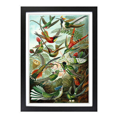 Framed Picture Print A2 Hummingbirds Vintage Animal Retro Wall Art Vertical