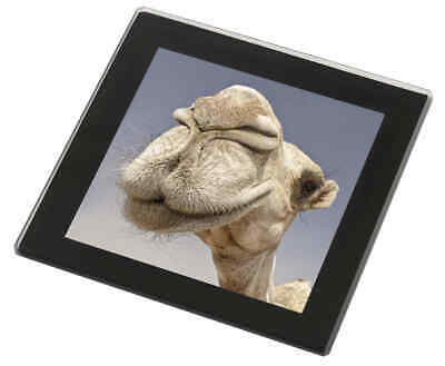 Camels Intrigued by Camera Black Rim Glass Coaster Animal Breed Gift, CAM-1GC