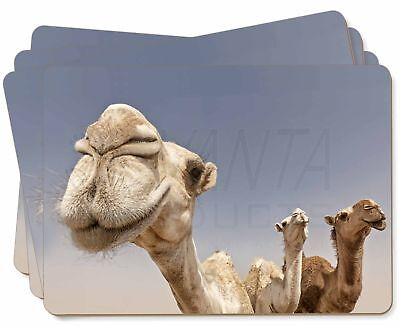 Camels Intrigued by Camera Picture Placemats in Gift Box, CAM-1P