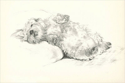 Sealyham Terrier Dog by Vera Temple 1937 8  LARGE New Blank Note Cards RELAXING!