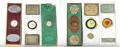 Antique Victorian Era Microscope Slides – English and French