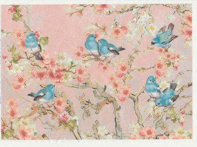 Rice paper -Blossom apricot - for Decoupage Scrapbooking Sheet