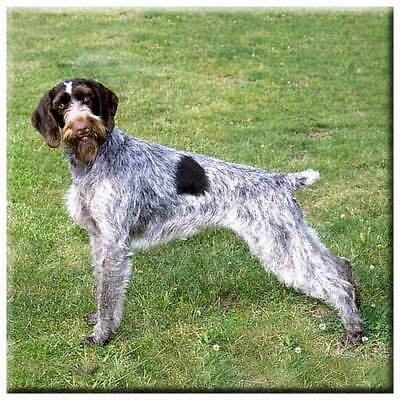 "German Wirehair Pointer 4"" Decorative, Cork Backed, Ceramic Tile"