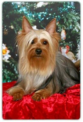 Silky Terrier Cutting Board, Small