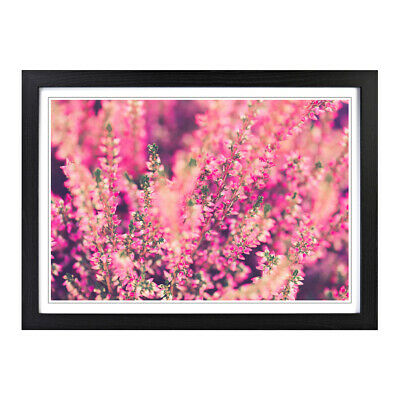 Framed Picture Print A2 Pink Flower Heathers Floral Botanical Wall Art