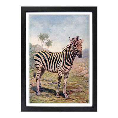 Framed Picture Print A2 Vintage Natural History Zebra Animal Retro Wall Art