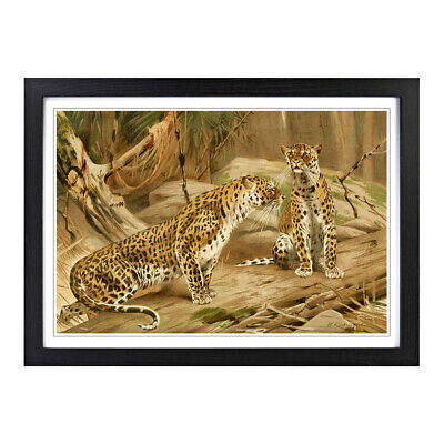 Framed Picture Print A2 Vintage W Kuhnert Leopards Animal Retro Wall Art