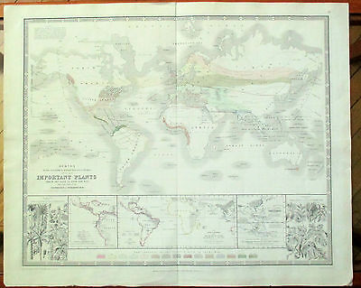 Rare Map 1845:  Survey...geographical Distribution & Cultivation Of...plants