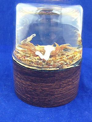 Vintage Nature Gems Educational Embedments Fiddler Crab paperweight crab display