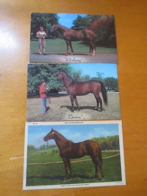 3Postcard Horses: Whirlaway, Man O' War And Citation Never Mailed