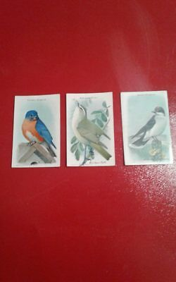 """VINTAGE ARM AND HAMMER """"USEFUL BIRDS OF AMERICA"""" 9 TH SERIES (3 cards)"""