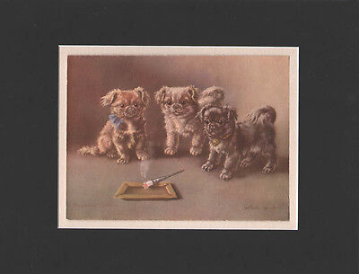 Pekingese Puppy Dogs Matted 1930's Print by  Minnie Keene 10X13 CUTE! Vintage