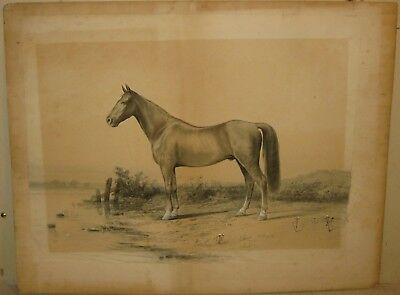 FINE Antique 19th Century HORSE Portrait Landscape Watercolor PAINTING - Listed?