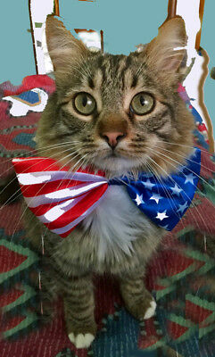 Sweet Patriotic Kitty Greeting Card  Blank Inside - Personalization Available