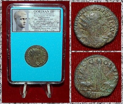 Roman Empire Coin GORDIAN III Moesia With Bull And Lion On Reverse Dupondius