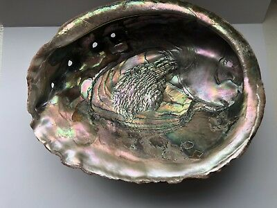 Vintage Large ABALONE/Paua/Mother Of Pearl SEASHELL Soap Dish 21 Cms #1