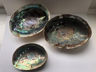 Vintage Set Of Three ABALONE/Paua/Mother Of Pearl SEASHELL Soap Dishes  #5
