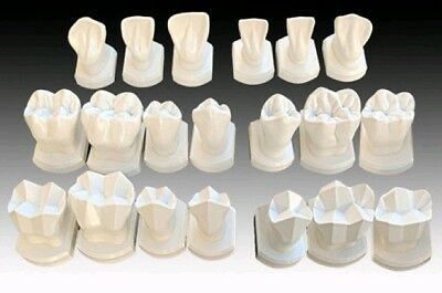 PTC Blue Dolphin Ness Model Teeth