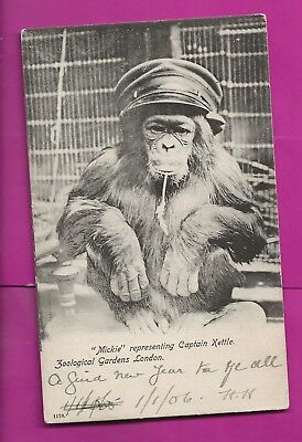 "Hong Kong   1906     Local   Picture  Postcard   Monkey  ""mickie"""