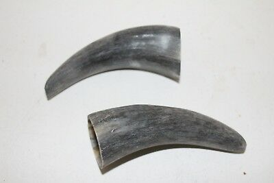 2 Cow horn tips ....  v2d87 ... Raw, unfinished cow horns.,.....