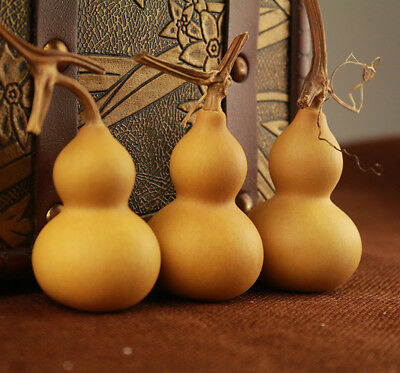 5pcs Natural Bottle Gourds Craft Dried Cleaned Calabash Cucurbit DIY Home Decor