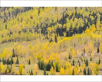"18242663 10""x8"" (25x20cm) Print Mountain trees in fall color, Gun..."
