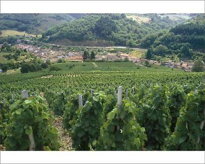 """18253773 10""""x8"""" (25x20cm) Print View Over Vineyards to a Small Town"""