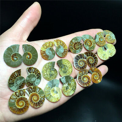 68.4G  11 pairs of Split Ammonite Fossil Specimen Shell Healing   A1405