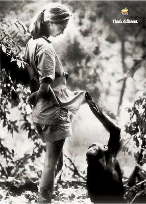 APPLE THINK DIFFERENT POSTER DR.JANE GOODALL. 50 x 70 cm. by STEVE JOBS