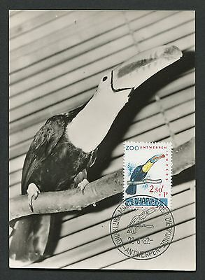 Topical Stamps Birds Belgien Mk 1962 Zoo VÖgel Birds Turako Maximumkarte Maximum Card Mc Cm D5605