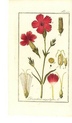 """6 Botanical Herbal Prints from """"Pictures of Medicinal Herbs"""" Published in 1798"""
