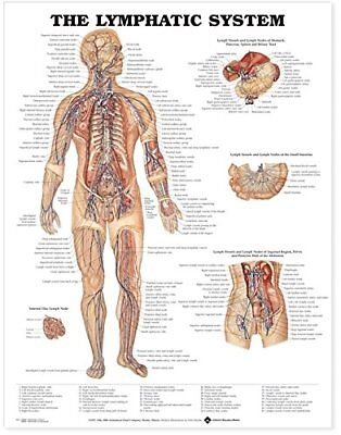 The Lymphatic System * Immunology  * Anatomy Poster * Anatomical Chart Company