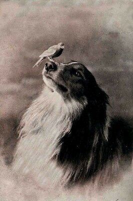 Antique Photograph Collie / Sheltie Dog Bird on Nose LARGE New Blank Note Cards