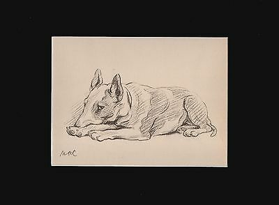 VINTAGE Bull Terrier Dog Sketch Print 1940 by Lucy Dawson 9x12 Matted
