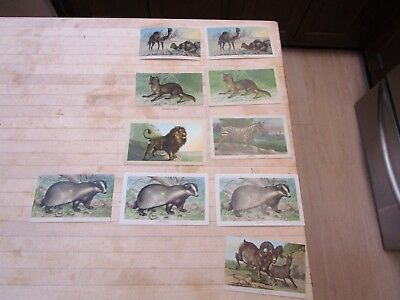 Lot (10) 1800's Advertising Trade Cards Coffee Arbuckle Bros Wild Animals