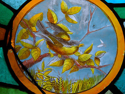 Beautiful Painted Bird Victorian English Antique Stained Glass Window Circa 1870