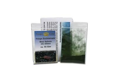 Triops Beni Kabuto ebi Albino Tadpole Shrimp Starter Kit by Triops King