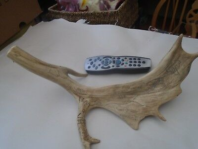 large antique Deer antler with Folk Art drawings  CURIOUS DUBLIN WITCH  WOW LOOK