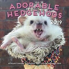 Adorable Hedgehogs 2019 Calendar - NEW - 9781631064661 by Rock Point (COR)