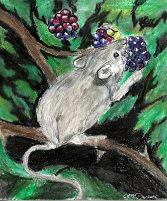 Mouse Rodent Berries Colored Pencil SFA Art Original Buckman