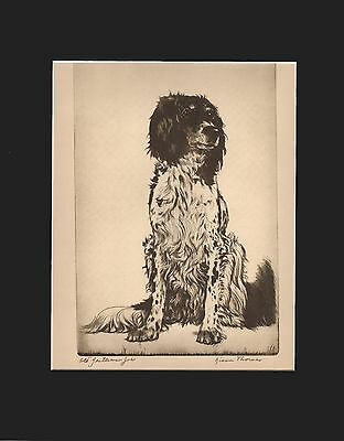 English Springer Spaniel Dog Etching Print 1935 by Diana Thorne 11 X 14 Matted