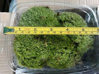Pillow & Sheet moss tubed one of each, amphibians, reptiles, Bio Active, Natural