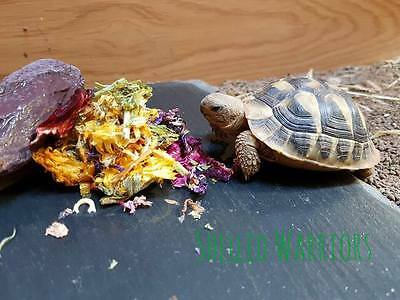 Dried Tortoise Flower Mix - Ready to feed BUY 1 GET 1 FREE
