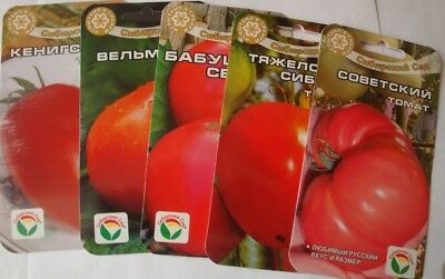100 Seeds Tomato  from Russian (No GMO)