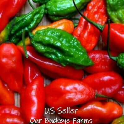 30+ Ghost Pepper Seeds, Bhut Jolokia, Extremely Hot, NON-GMO, Heirloom