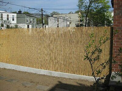 4M Natural Reed Fence Peeled Reed Fencing Screening Roll Screen Panel