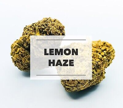 Lemon Haze Terpene | Hanf Konzentrat | Bio | 2ml
