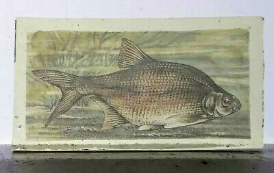 Stained Glass Bronze Bream Fish - Kiln fired Painted / transfer fragment pane!
