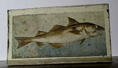 Stained Glass Haddock - Kiln fired hand painted / transfer fragment Fish pane!