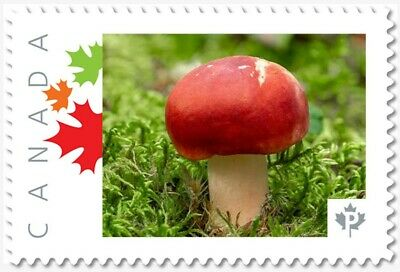 MUSHROOM = RED HAT = Picture Postage stamp MNH-VF Canada 2019 [p19-02sn20]